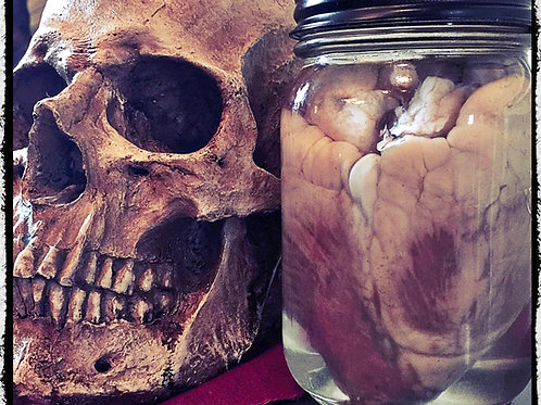 Preserved sheep heart. I love you to death...
