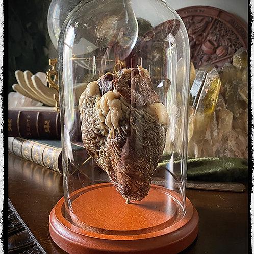 Mummified Sheep Heart in Glass Dome