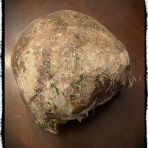 Antique Human Skull Cap