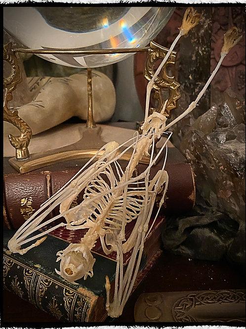 Large Hanging Skeleton Bat