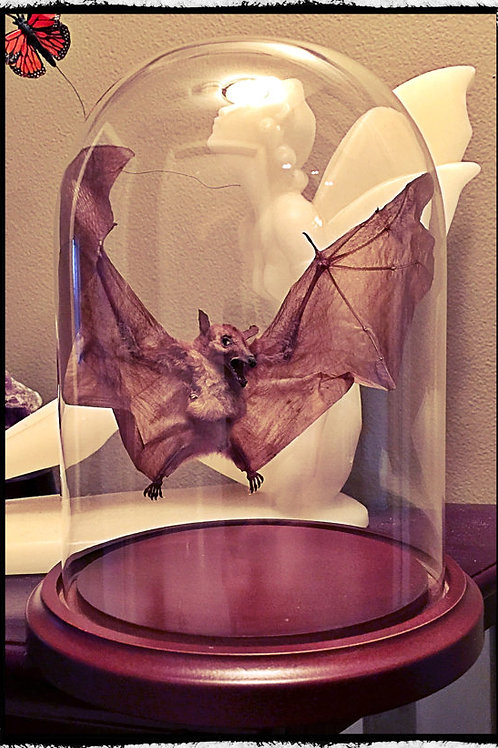 Winged Bat Under Dome