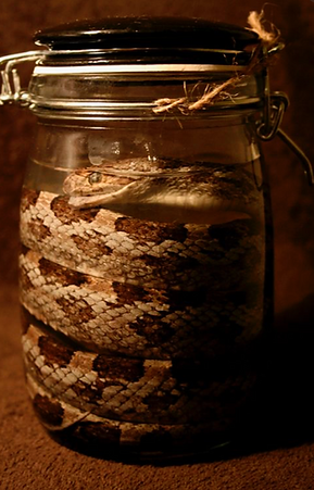 Dead Things in jars picture number 1 by www.odditiesdomains.com