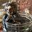 Thumbnail: Monkey - Marmoset - Wet Specimen.