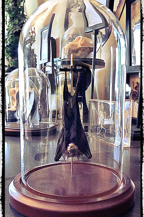 Medium Hanging Bat In a Glass Dome
