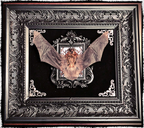 This Is For One Preserved Bat In A Embellished Double Medium Frame Display The Dimensions Of Measure Apx 15 Wide By 13 High