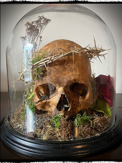 Antique Human Skull Display - With crown of thorns