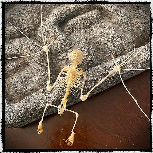 Skeleton Bat Open Wing  - Macroglossus Minimus