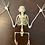 Thumbnail: Skeleton Bat Open Wing  - Macroglossus Minimus