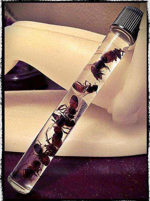 Ten Preserved Honey Bees in Glass Vial