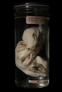 Dead Things in jars picture number 3 by www.odditiesdomains.com