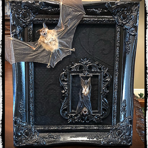 Double Taxidermy Bat in a Frame - Featuring a Removable Bat