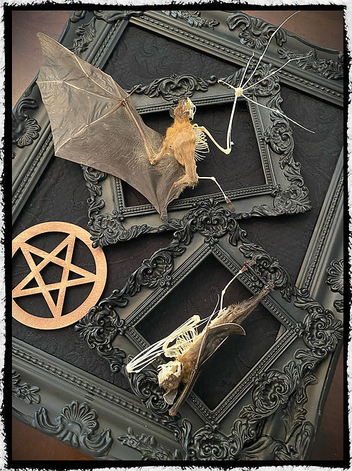 Double Taxidermy Half Skeleton Bats in a Frame