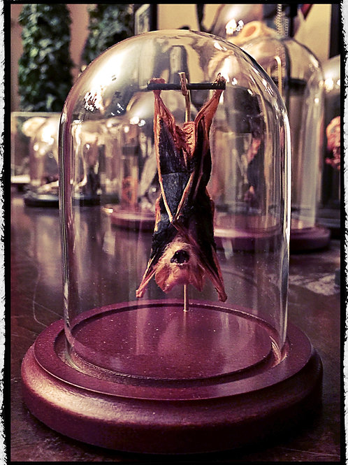 Small Hanging Bat In a Glass Dome