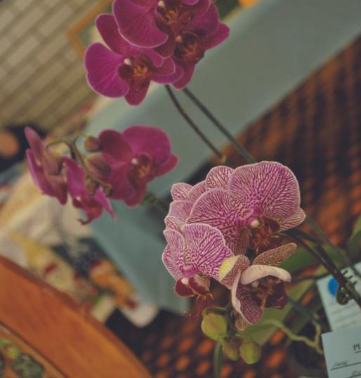 orchids.tif