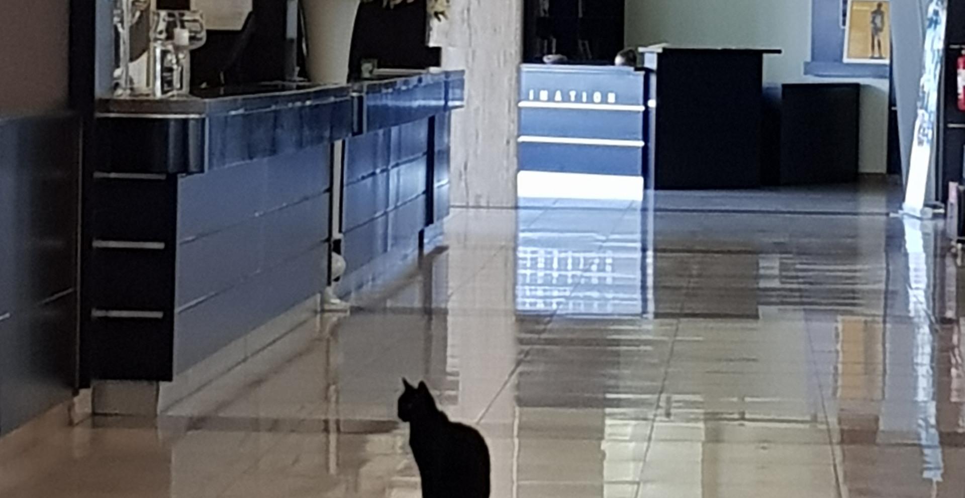 hall e reception