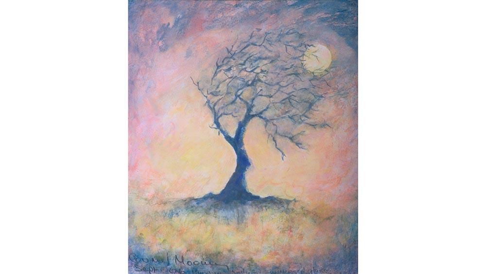 Fairy Tree in Evening Light