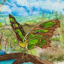 ws Malachite Butterfly