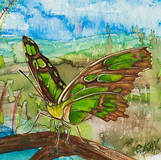 Frogs and Snails, Malachite Butterfly SQ.jpg