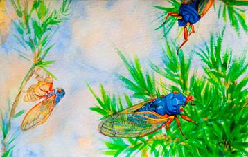 ws17 Year Cicadas