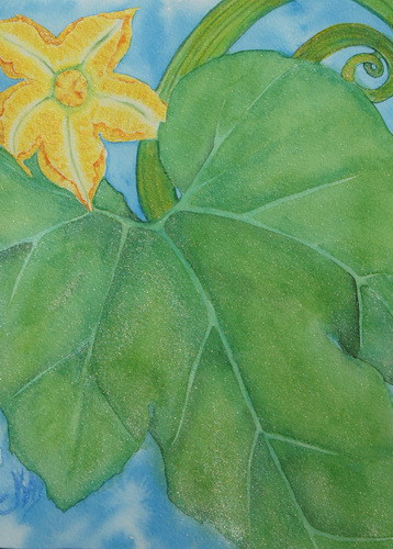 Pumpkin Flower in June watercolor