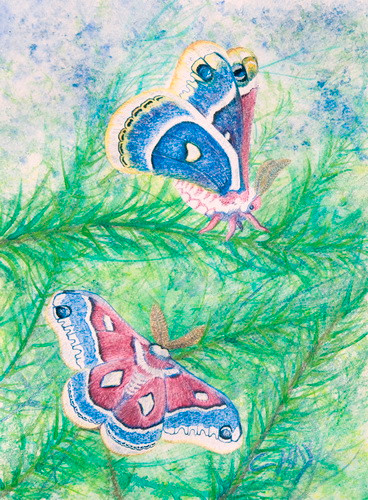 Frogs and Snails, Silk Moth.jpg