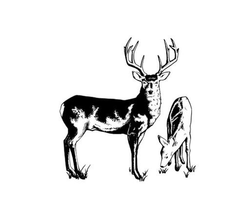 Town of Gypsum logo  Buck n Doe vector
