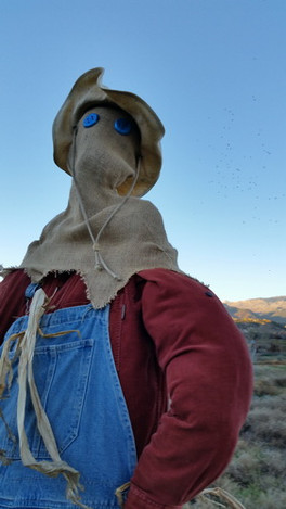 Haunts in the Town of Eagle Scarecrow