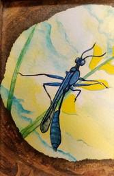 ws Spider Wasp
