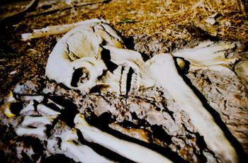 Little Spider Creations Herculaneum skeleton