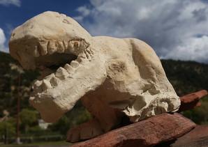 T-Rex by Scott