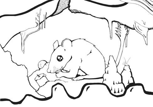 Pac Rat