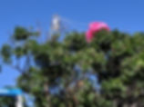 r rocket in tree.jpg