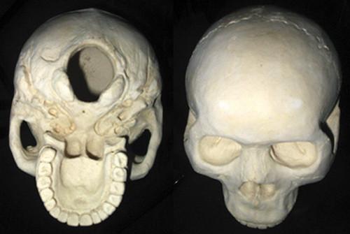 Skull study ceramic