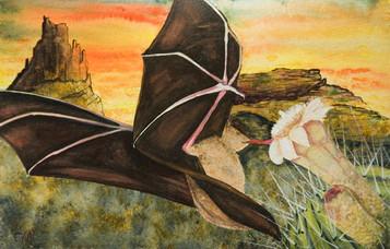 ws Nectar Bat
