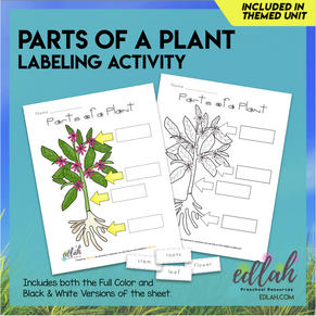 Parts of a Plant Activity Sheet