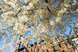 Chruch Square Blooms