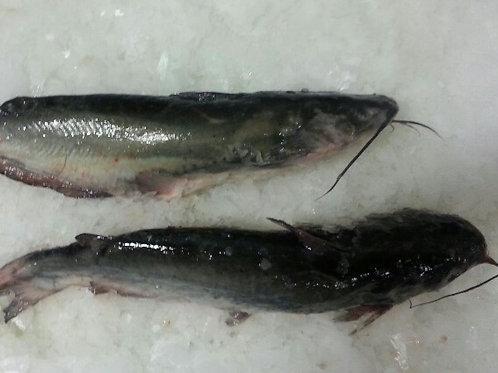 WS Catfish Whole