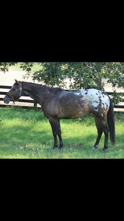 Whitestone Farm Horse