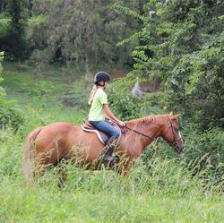 Whitestone Farm Lessons