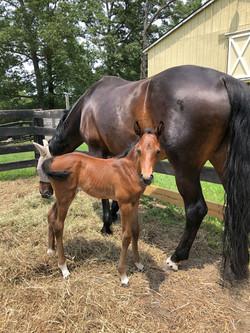 Whitestone Farm Horses