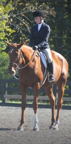 Whitestone Farm Horse and Rider