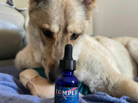 CBD for Pets 101: Everything you Need to Know
