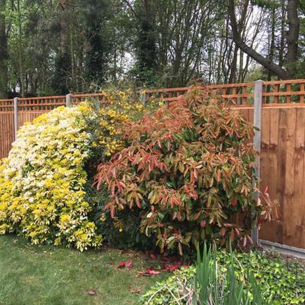 Nice little boundary fence erected.