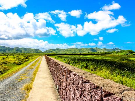 Scenic Walk through Kawanui Marsh