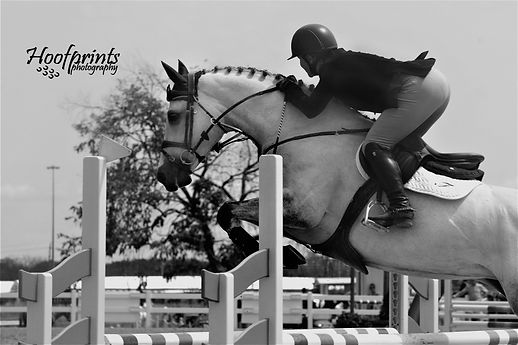 Horse & rider competing in show jumping