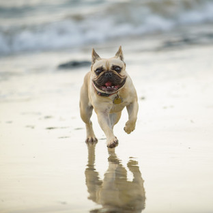 Adorable pet photography at JW Marriott, Costa Rica