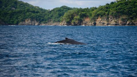 Wildlife phogography with Panache Sailing in Playa Flamingo, Costa Rica