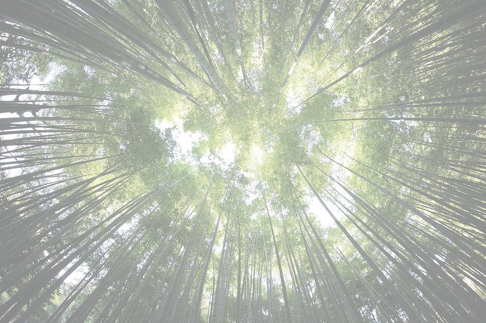 Bamboo%20leaf%20canopy_edited.jpg
