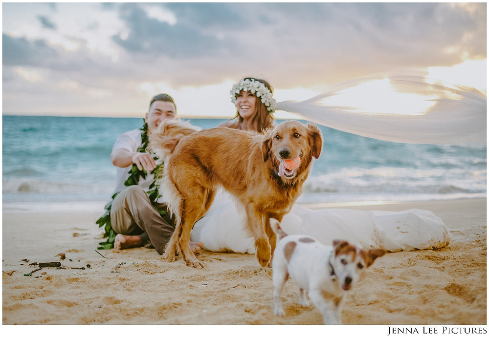 Sunrise Wedding Session with furry pups on the beach who photo bombed to play!