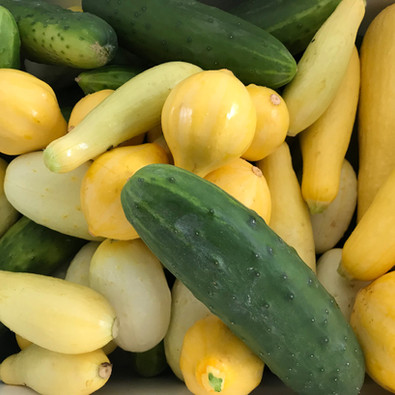 Squash and Cucumbers